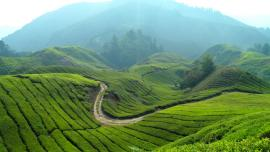 باقة سياحية عائلية 4 أشخاص لمدة 14  يوم مع مرتفعات كاميرون  ماليزيا السياحية