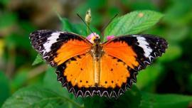 حديقة الفراشات ماليزيا - في ماليزيا