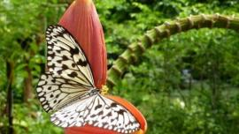 حديقة الفراشات في بينانق - في ماليزيا