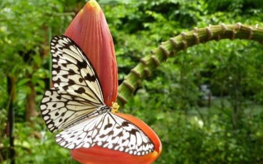 حديقة الفراشات في بينانق