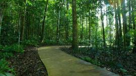 معهد ماليزيا لأبحاث الغابات (FRIM) - في ماليزيا