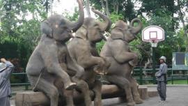 حديقة الحيوانات الوطنية  - في ماليزيا