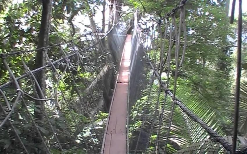معهد ماليزيا لأبحاث الغابات (FRIM)